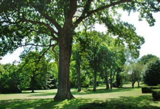 Vi passer på træerne